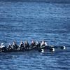 Women's Rowing, Heavyweight