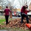 Leaf-Cleanup