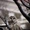 Owl in the Yard